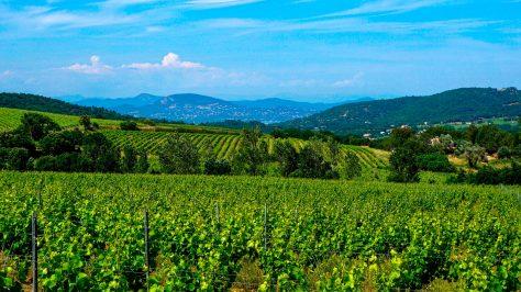 Viñedos del sur de Francia