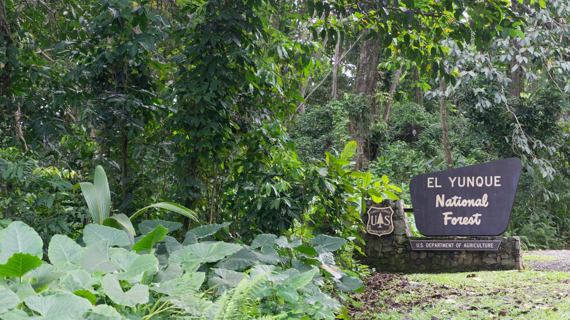 El Yunque National Forest, San Juan Puerto Rico