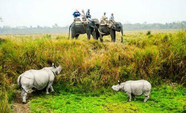 Safari en Parque Kaziranga, Assam, India