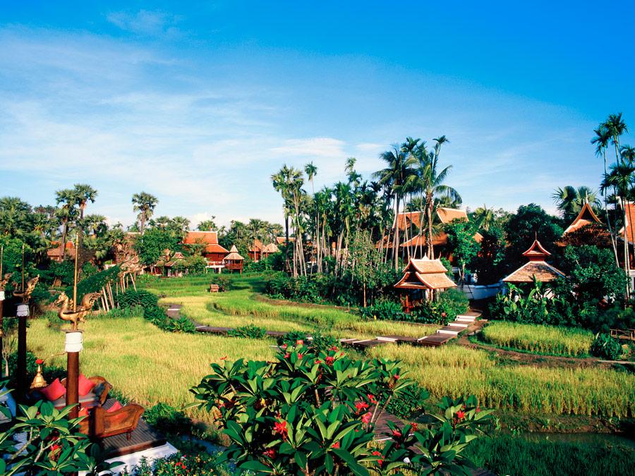Campos de arroz en el Dharadhevi hotel, Tailandia