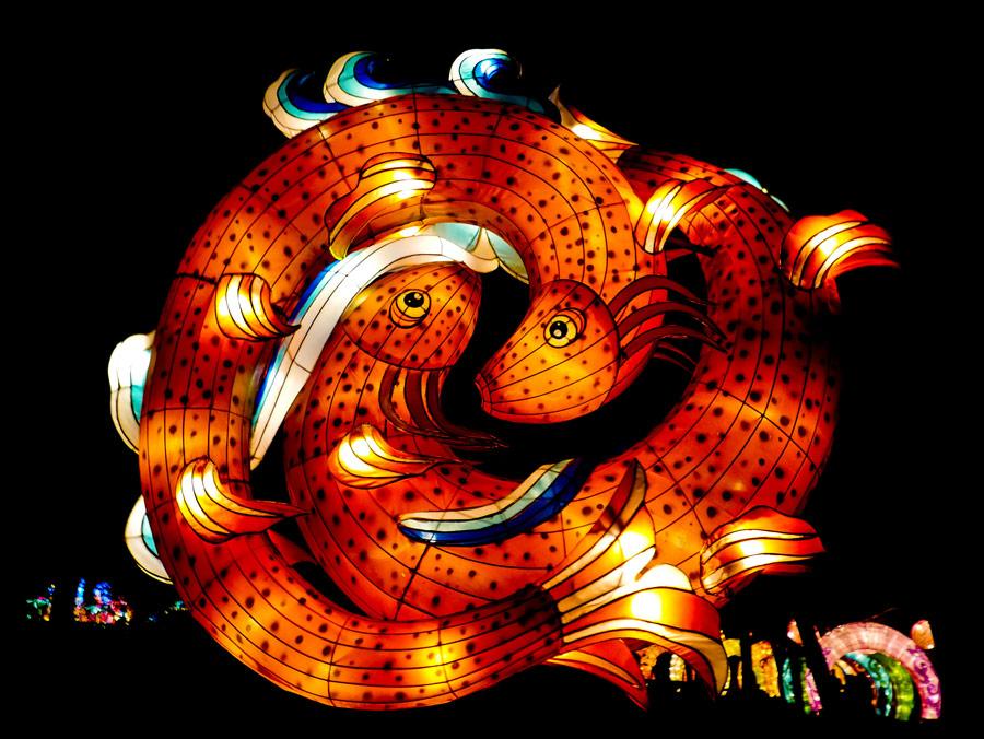 Faroles gigantes con formas de peces durante el festival