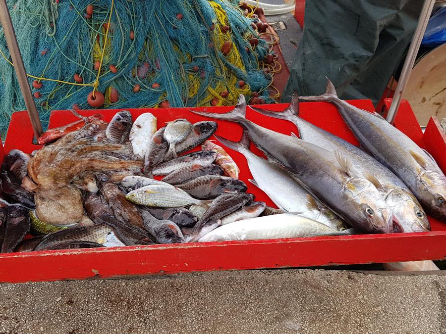Mercado de pescadores junto al paseo martítimo en Argostoli