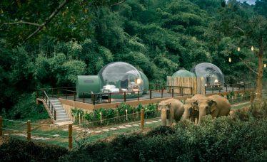 Anantara Jungle Bubbles
