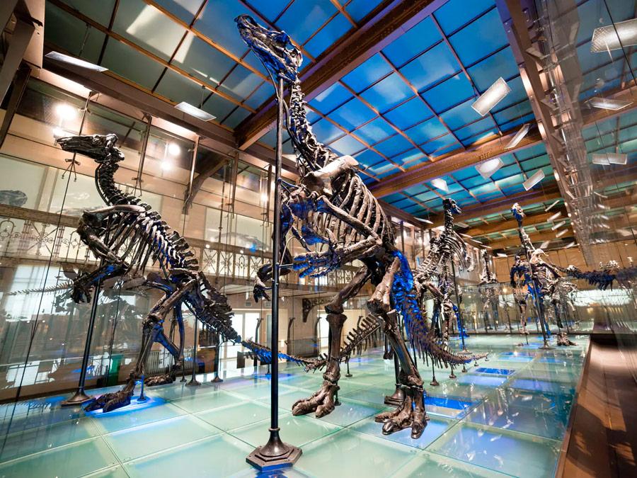 Museo de Ciencia de Bruselas