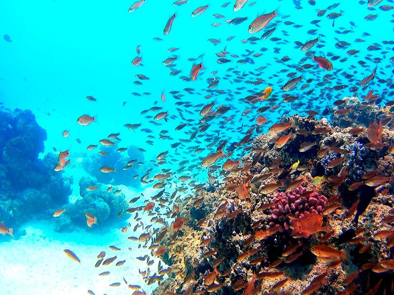 Buceo en la isla de Tokashiri, Okinawa, Japón