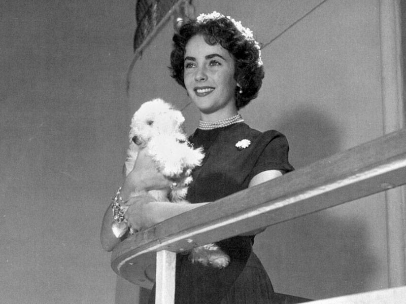 Elizabeth Taylor en su luna de miel en 1950